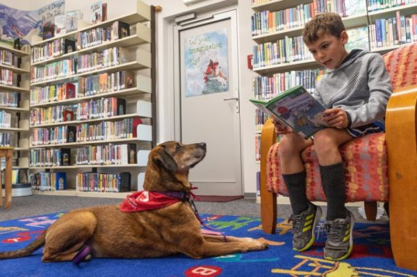 child reading a book with a dog sitting