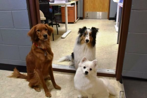 three dogs at the doorway